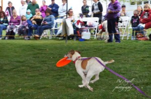 Best catch dog