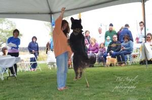 Best Jumping Dog