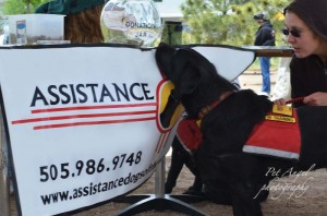 Assistance Dogs of the West Black Labrador Dog