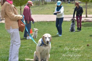 "American Kennel Club's ""Canine Good Citizen"" test"