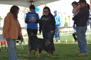 Peaceful Pet Sitters Judging a contest
