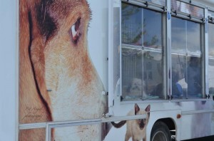 Santa Fe Animal Shelter Mobile Adoption Center