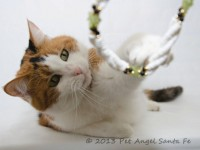 Pet Angel photography, Santa Fe NM