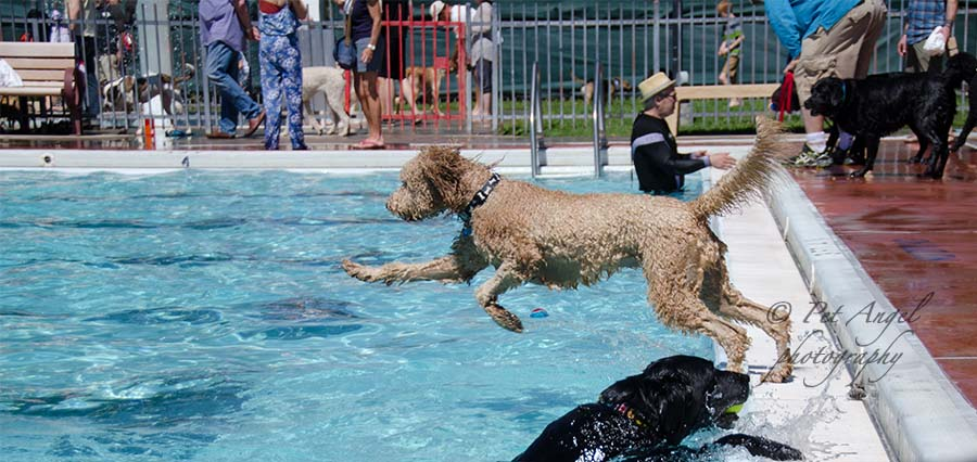 Doggy Dip 2015 in Santa Fe