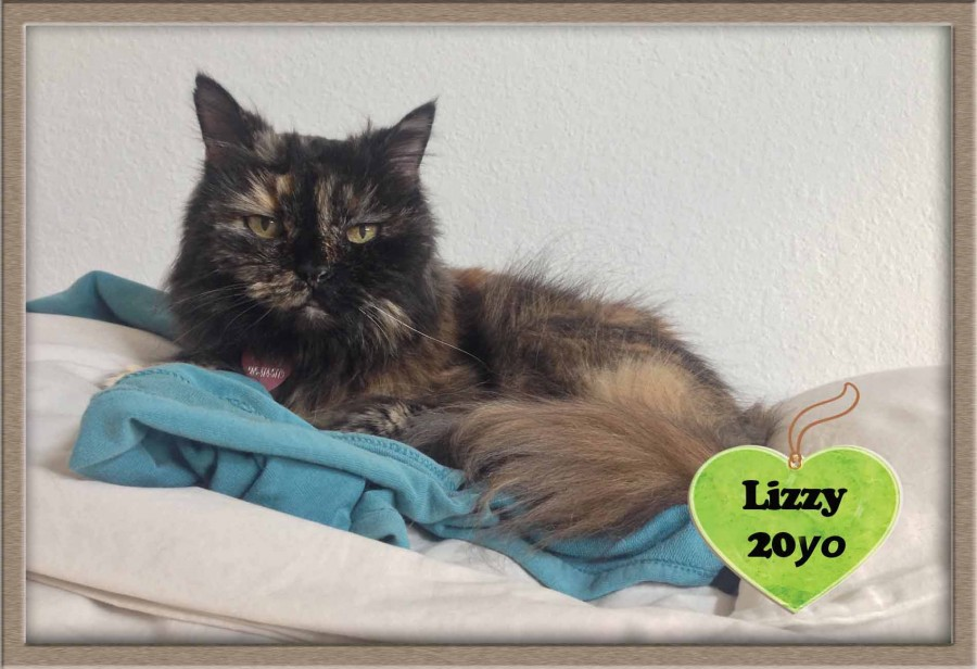 Lizzy 20 year old cat crossed the Rainbow Bridge