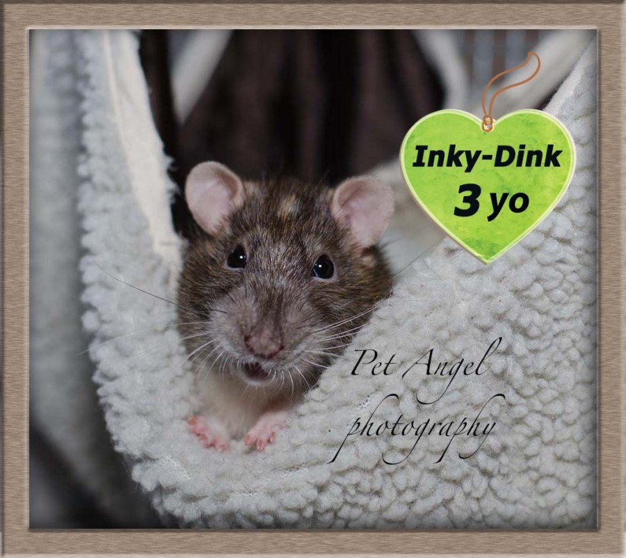 Inky Dink