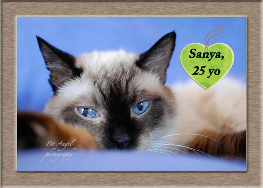 My cat Sanya