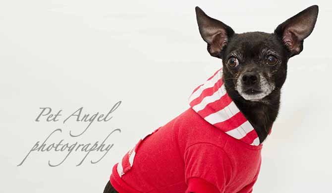 Dog Photography<br />at Your House