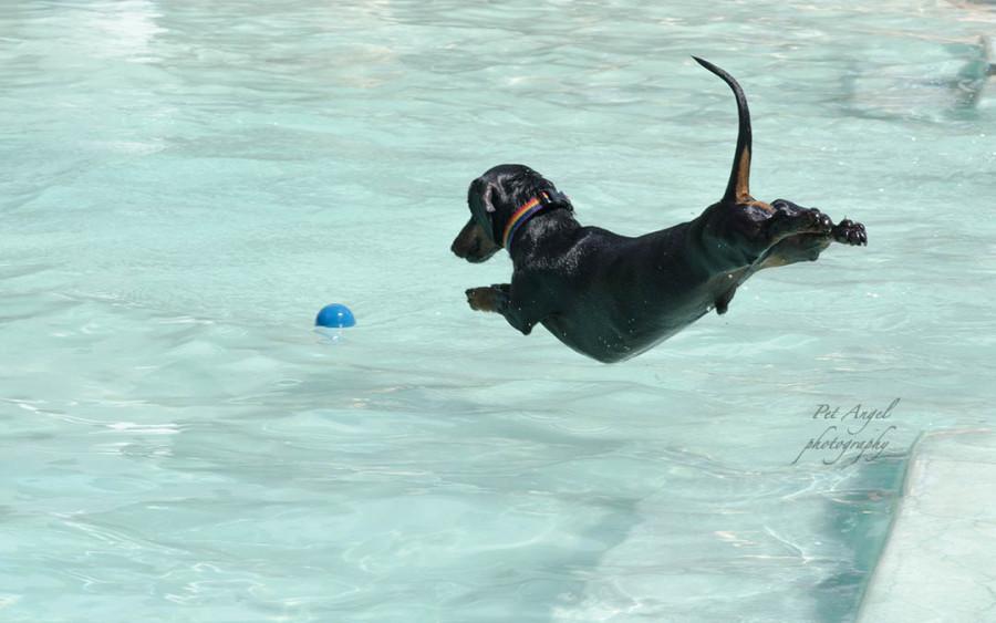 Doggy Dip 2014