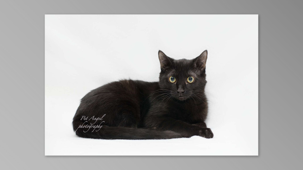 Black cat photograph